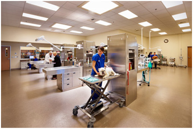 (Photo used with permission from Veterinary Economics.) TriStar Vet blog: Mueller Pet Medical Center used TriStar veterinary wet tables and veterinary work islands in their award-winning design.