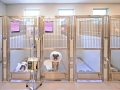 TriStar Vet kennel photo: 2013 Hospital Design Award Winning stainless steel recovery kennels