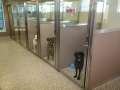 TriStar Vet kennel photo: Patients stand ready for care in these stainless steel and Starlite kennels