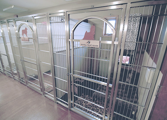 Find Veterinary Kennel Doors That Support Top Quality Dog