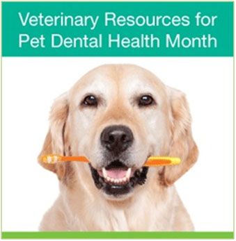 TriStar Vet photo: Se these tips on veterinary dental equipment and more during the AVMA-designated February National Pet Dental Health Month