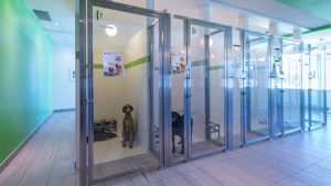Veterinary Dog Kennels